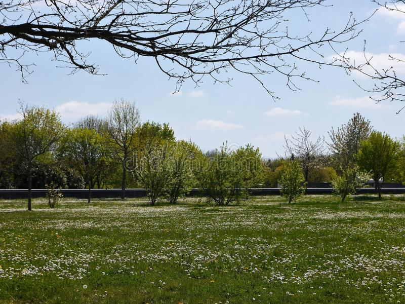 Flowering meadow in spring, in the air above in the foreground still leafless branches. In the blurred background bushes, trees and a boundary wall royalty free stock photos