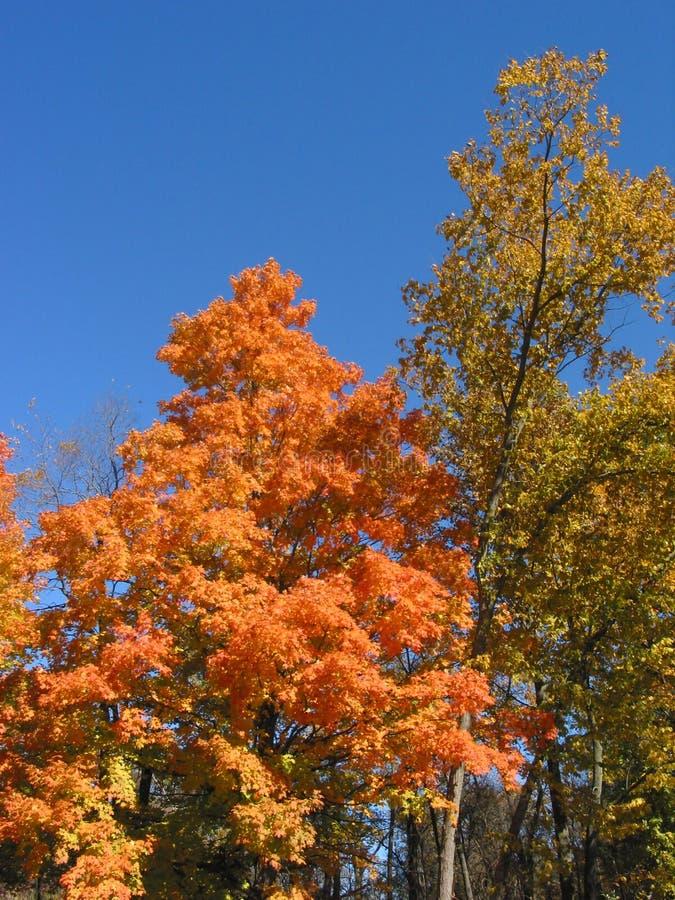 04_10_2_032 de las hojas de otoño foto de archivo libre de regalías