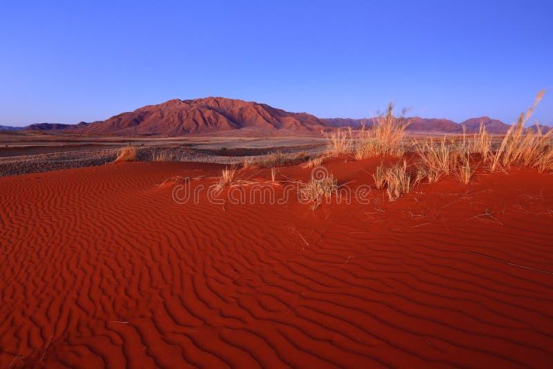 Â Wolwedans del bordo NR di Namib fotografia stock libera da diritti