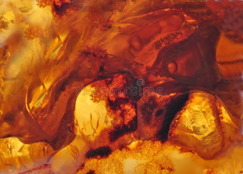 Âmbar Báltico, segmentos da resina imagens de stock