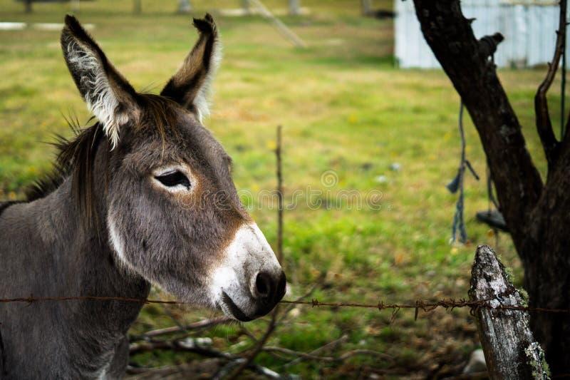 Âme d'âne photos libres de droits