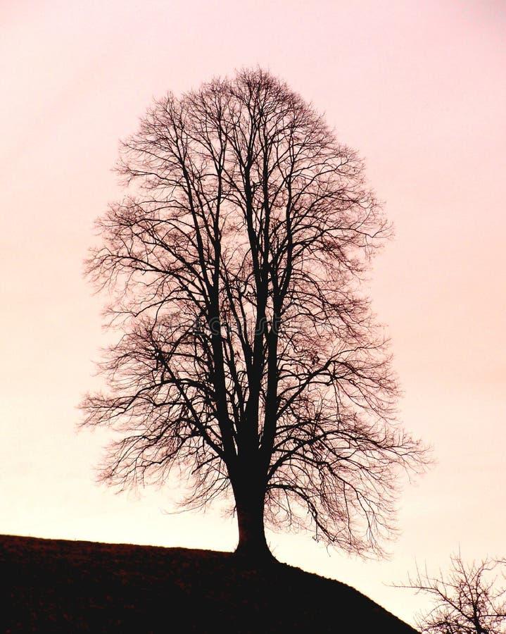 Âme de l'arbre. photographie stock libre de droits