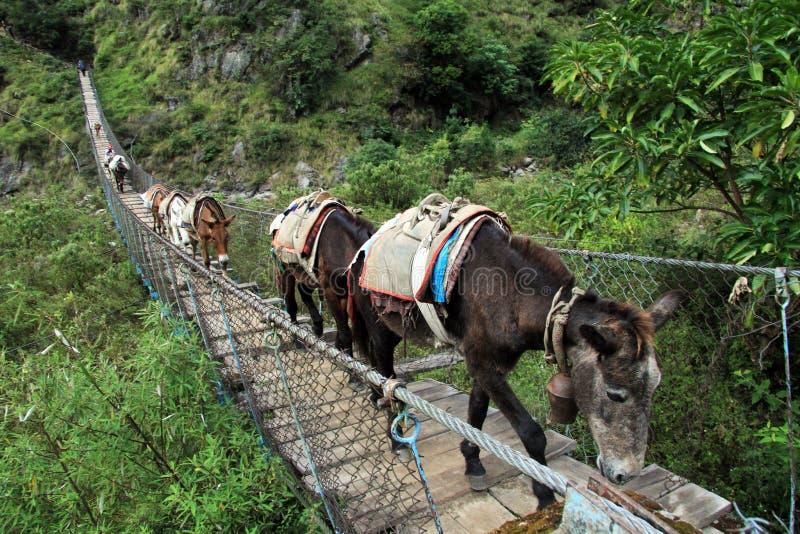 Ânes sur le pont images libres de droits