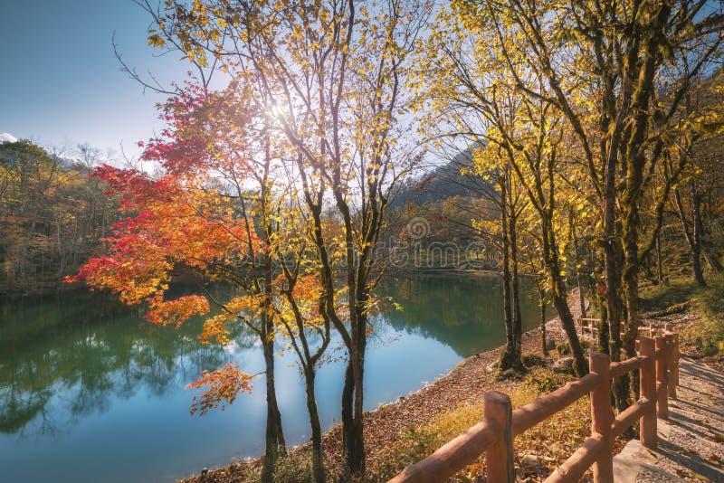Árboles coloridos en el ¼ ŒSichuan, China del autumnï imágenes de archivo libres de regalías