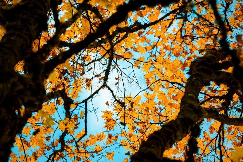 Árboles coloridos en el ¼ ŒSichuan, China del autumnï foto de archivo libre de regalías