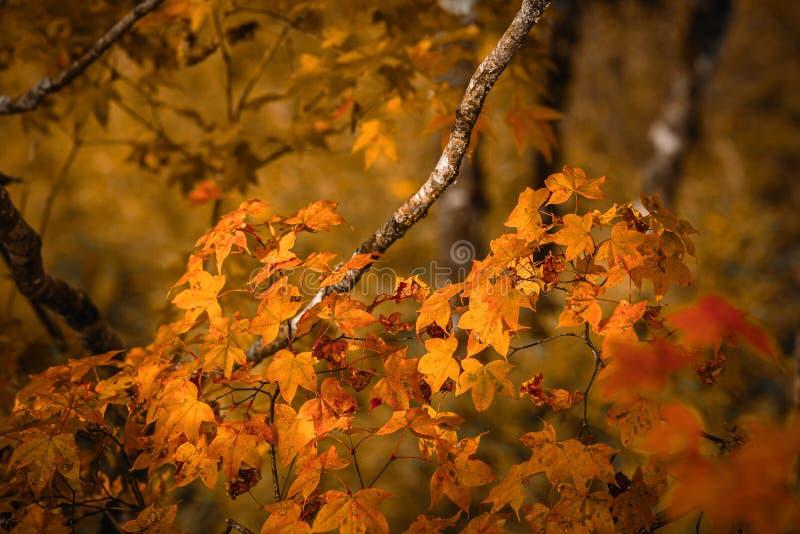 Árboles coloridos en el ¼ ŒSichuan, China del autumnï imagen de archivo libre de regalías