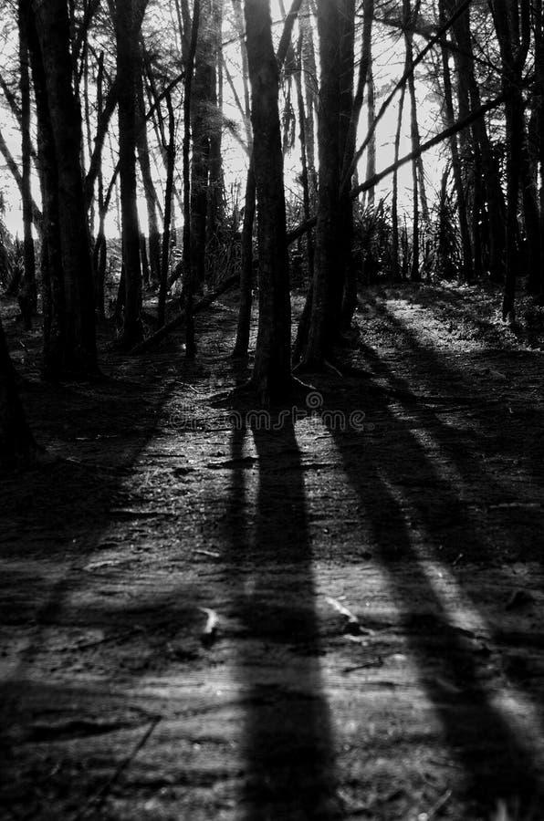 Überraschen des schwarzen u. weißen Baums und des Schattens stockfoto