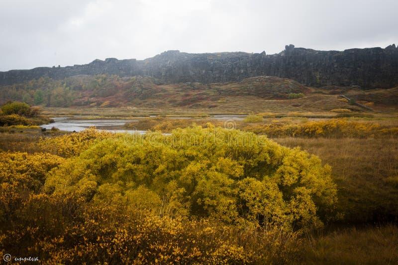 Þingvellir Island stockbild