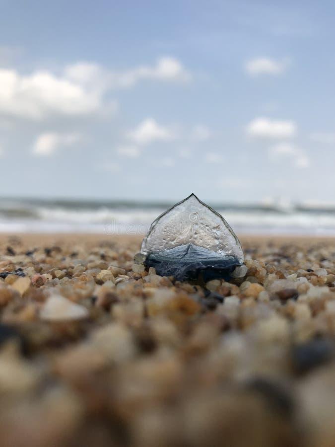 不可思议的壳是象一艘小帆船 图库摄影
