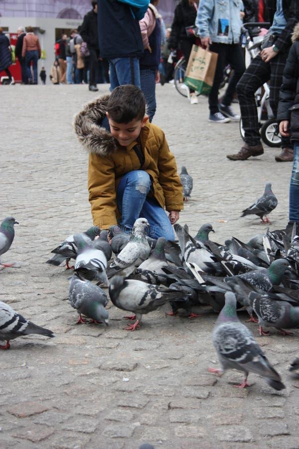不可能验明的孩子在水坝广场在阿姆斯特丹由鸽子围攻了在一个冬日 库存照片