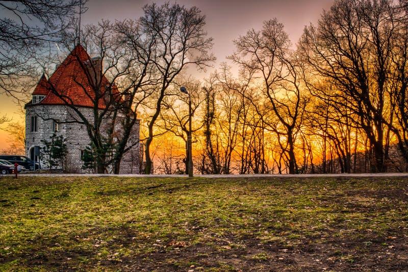 不生叶的树围拢的日落 免版税图库摄影