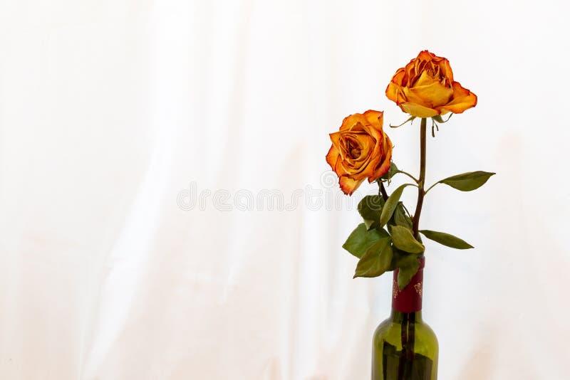 两与红色外缘玫瑰的古色古香的干桔子在一个酒瓶有被隔绝的白色背景 免版税库存图片