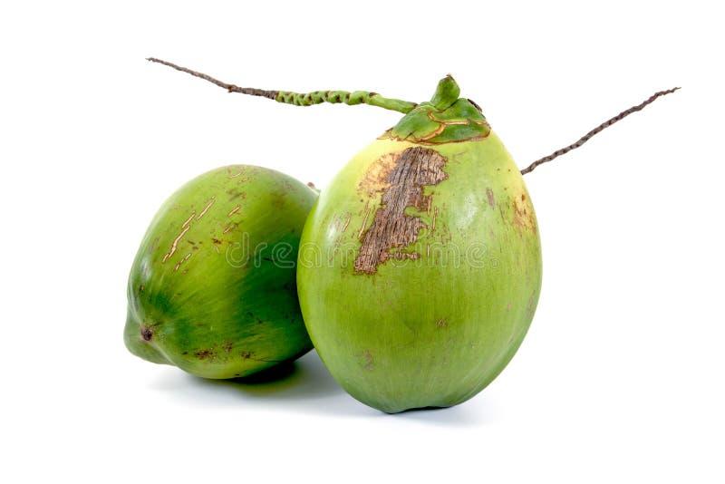 两在白色背景隔绝的新鲜的绿色年轻椰子 免版税库存照片