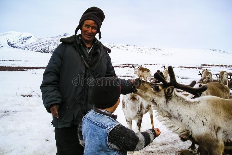 为吃草驯鹿牧群吃草  驯鹿在Chukotka,Chukchi种田 免版税库存照片