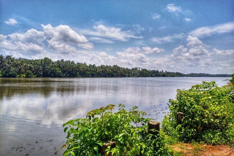 主导的椰子林木线和河岸 免版税库存照片