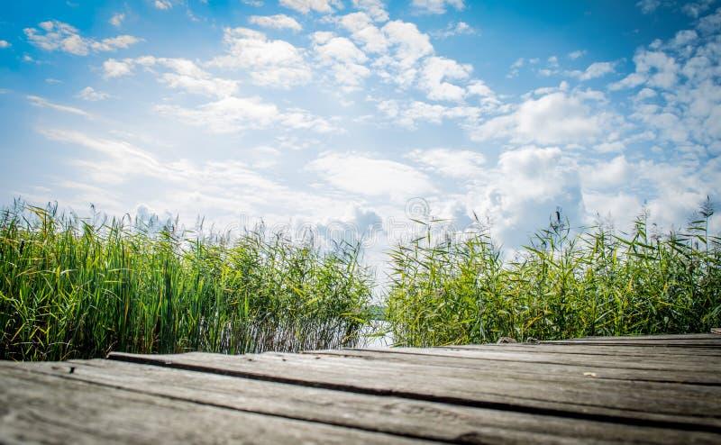 与一个老木平台的风景以反对天空蔚蓝的芦苇为目的在一清楚的好日子 免版税库存照片