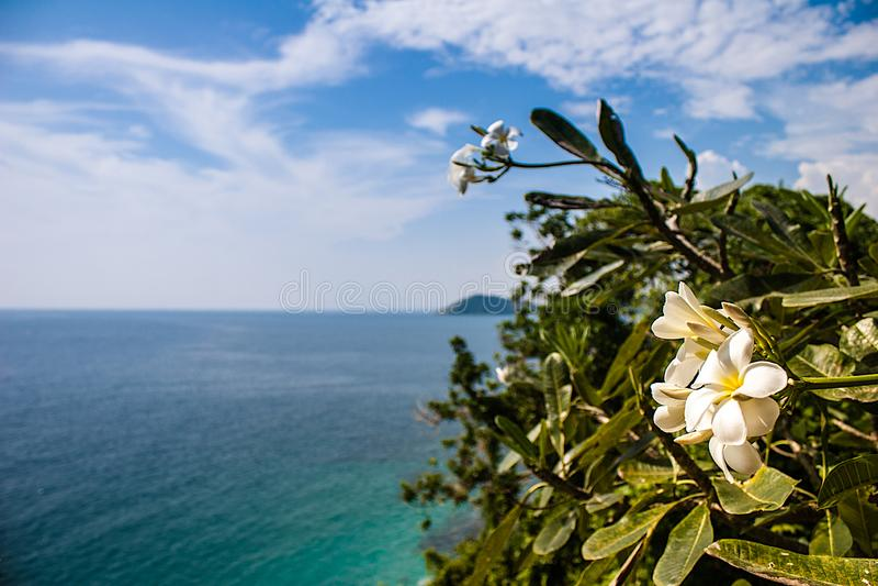 与一束白花的热带海景在前景 免版税库存照片