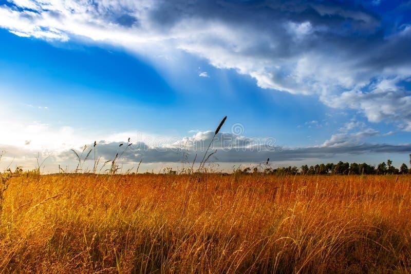 与云彩的美好的夏天风景 夏天背景 图库摄影