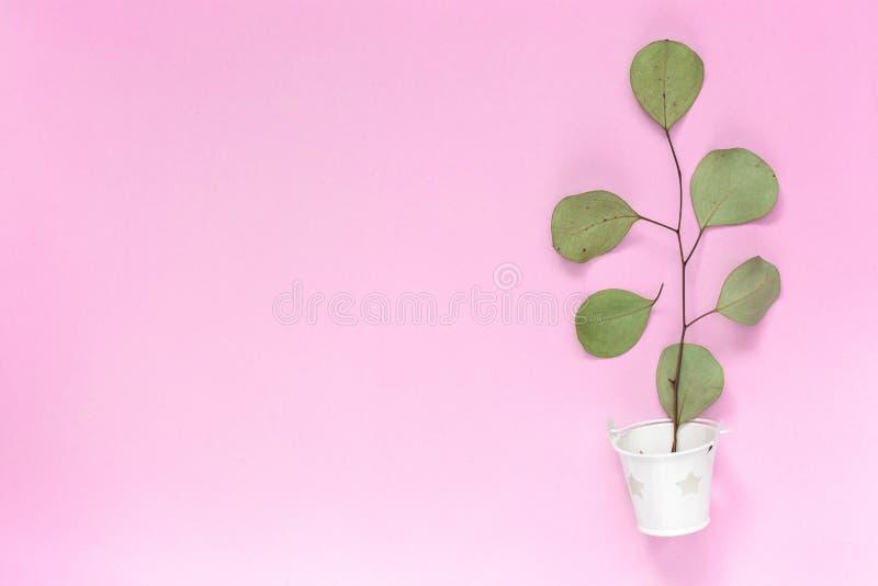 与叶子的小树枝在简单的桃红色背景的一个白色桶与文本copyspace的,topview,大模型一个区域,flatlay 免版税库存照片