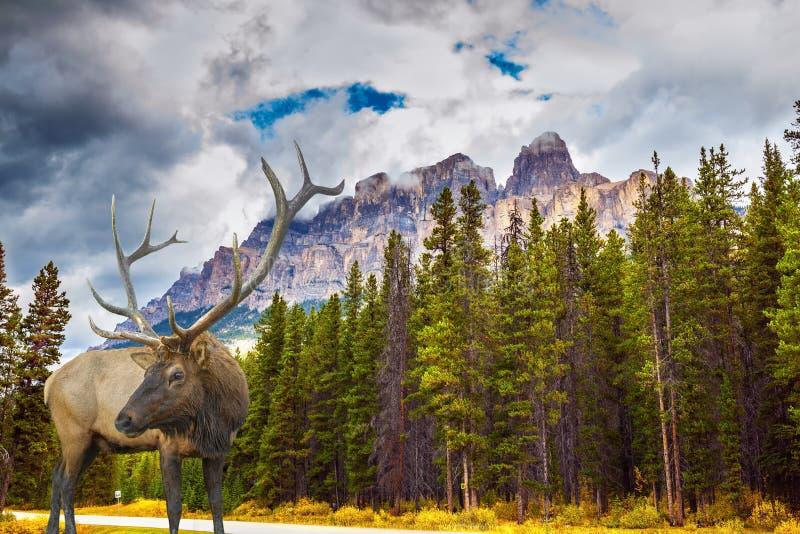 与多枝垫铁的意想不到的鹿在森林 免版税库存照片