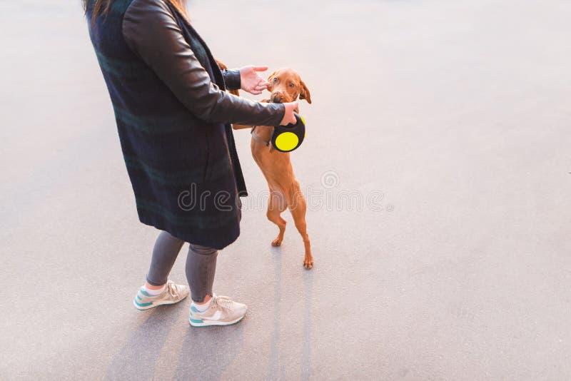 与她自己一会儿走的狗舞蹈 狗使用 免版税图库摄影