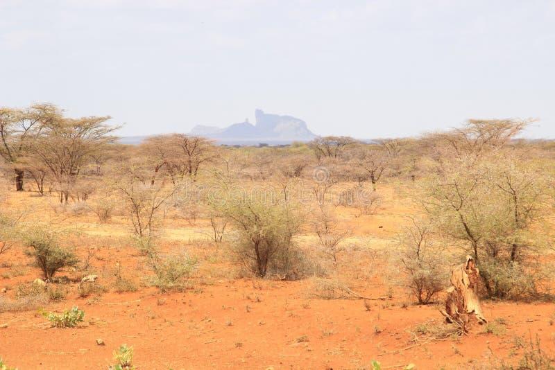 与干植物和山的非洲干燥热的大草原 免版税库存图片