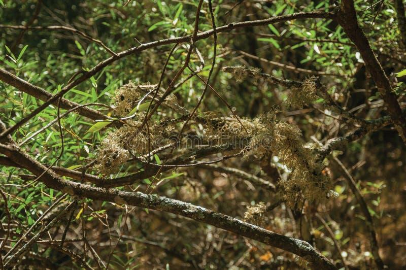与地衣的分支在土道路穿过森林 免版税库存照片