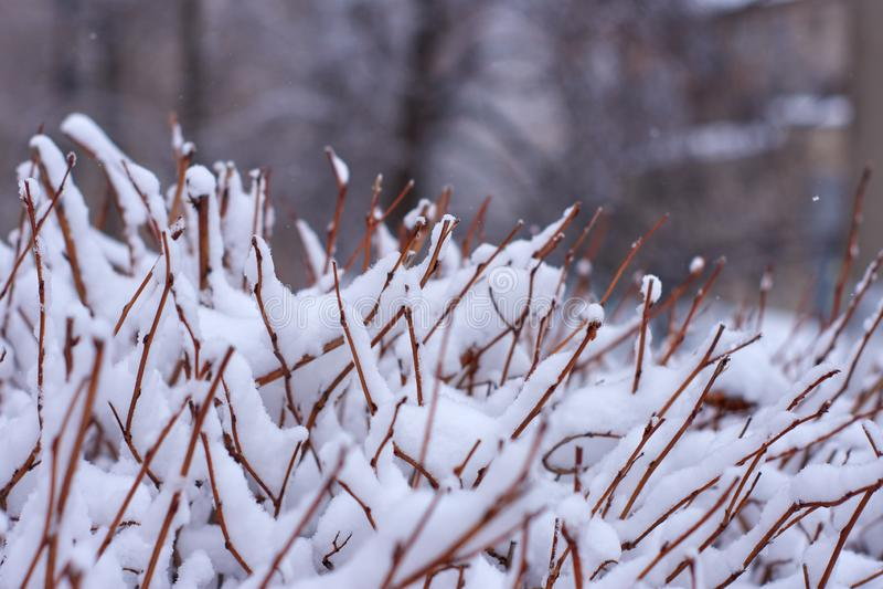 与冷淡的灌木的冬天背景 免版税库存照片