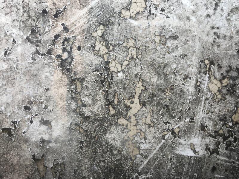 与模子和地衣的老灰色水泥 库存照片