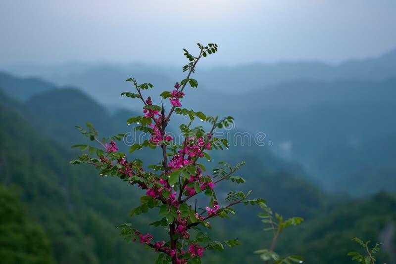 与水下落的美丽的自然野草花在多云背景的早晨时间 库存图片