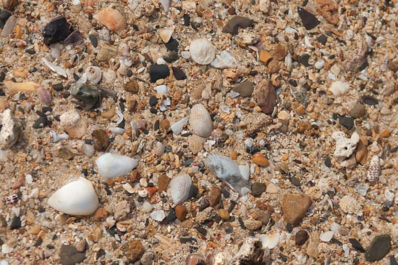 与沙子、海壳和海星的海滩背景 免版税库存照片