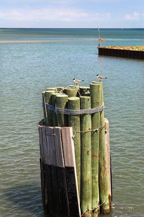与木杆和海鸥的海景 库存照片