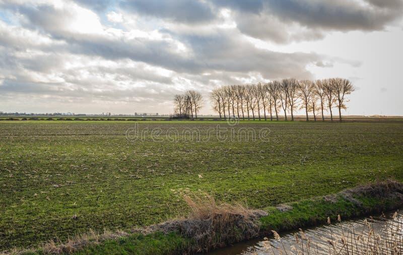 与最近被锯的草的荷兰开拓地风景 库存照片