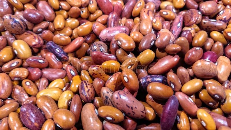 与拷贝空间的多彩多姿的豆种子背景 库存图片