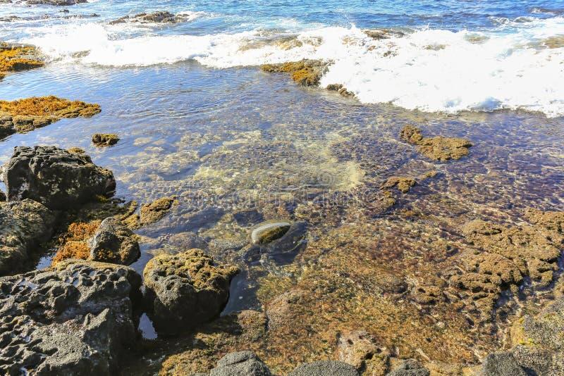 与碰撞在岩石和礁石上的波浪的场面与吃在波浪的乌龟 免版税库存图片