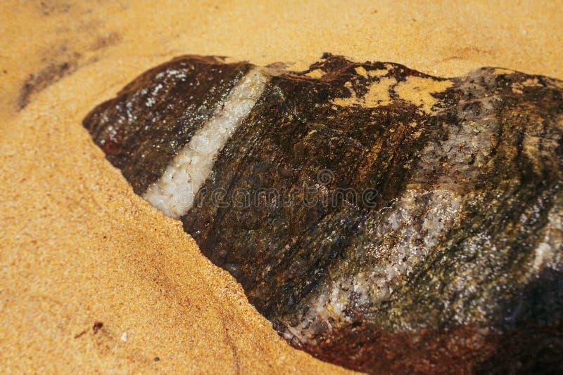 与空白线路的石头在沙滩在斯里兰卡 免版税库存照片
