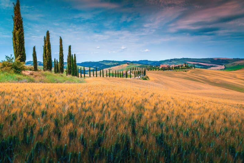 与粮田和弯曲的农村路,意大利的托斯卡纳风景 免版税库存图片