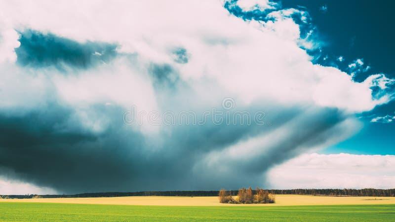 与绿草的领域或草甸风景在风景与白色蓬松云彩的春天蓝色剧烈的天空下 雨云 库存照片