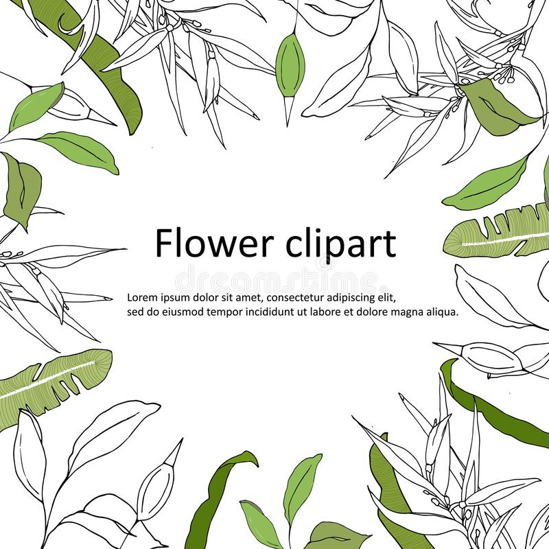 与绿色和等高叶子的语篇框架图 等高Clipart用于设计 问候的,邀请绿色明信片海报 向量例证