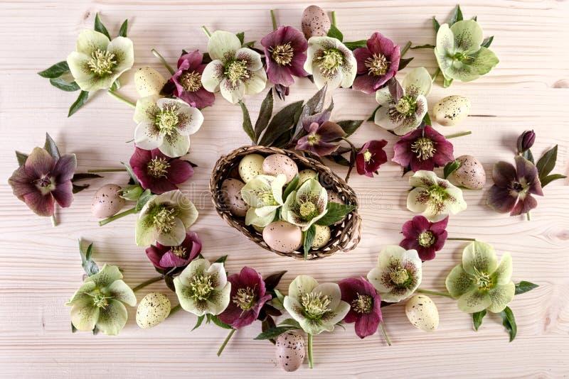 与白色紫色四旬斋玫瑰和复活节彩蛋的花的布置在轻的木头 免版税库存照片