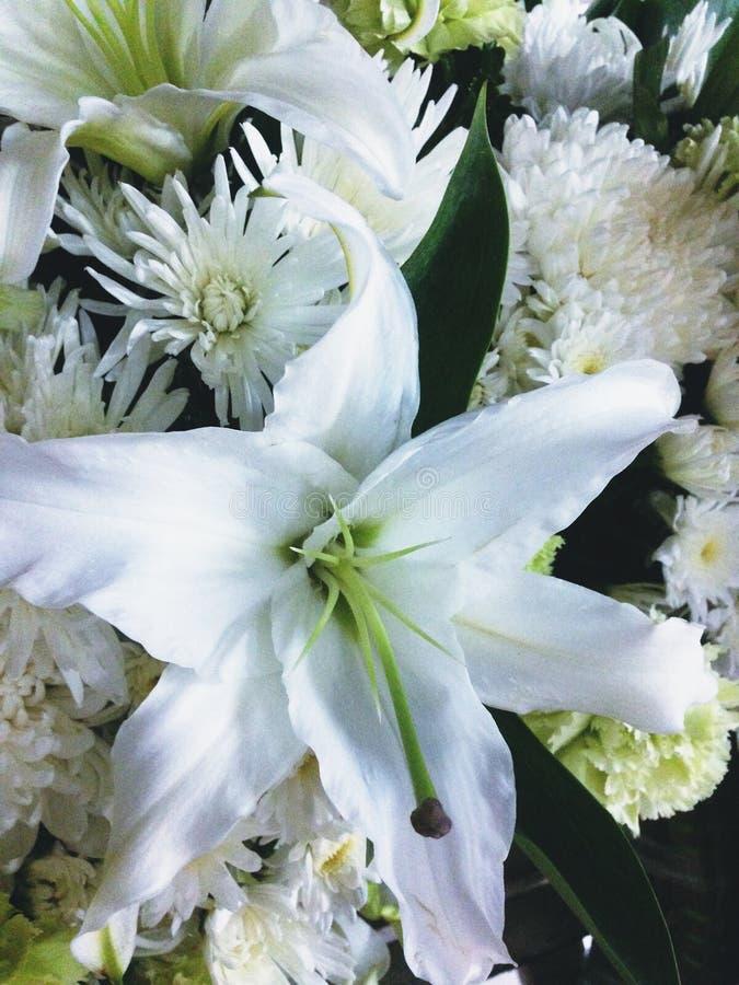 与白色菊花的白百合看起来镇静和纯净祝贺或显示吊唁 图库摄影