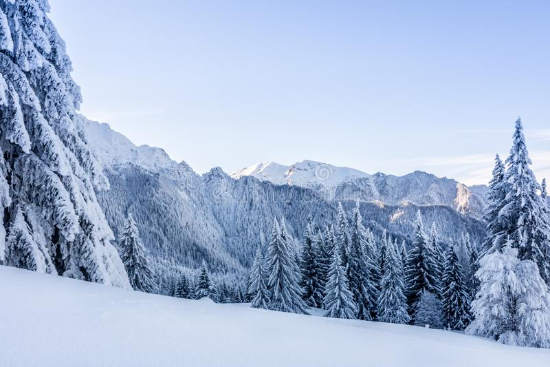 与用雪和山的冬天风景盖的树 库存图片