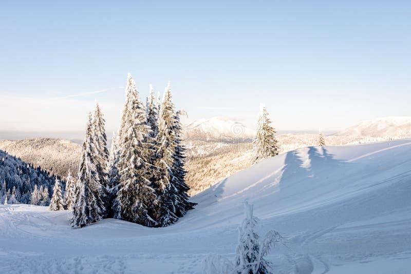 与用雪和山的冬天风景盖的树 免版税图库摄影