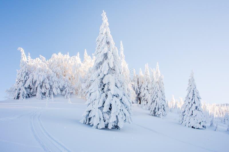 与用雪和山的冬天风景盖的树 免版税库存照片