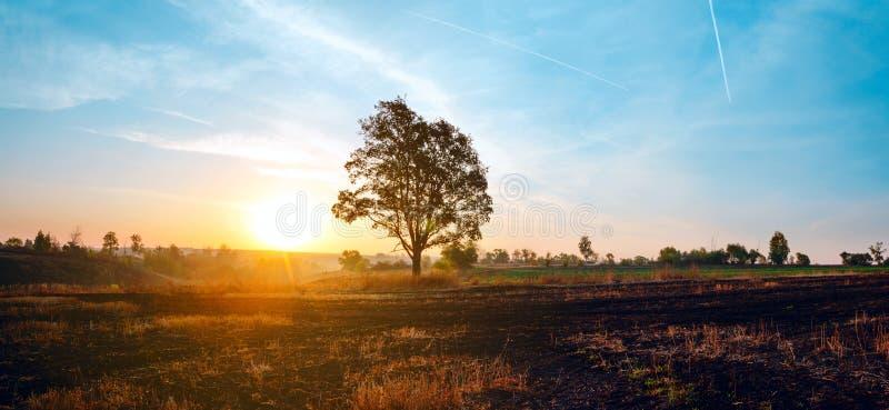与生长在日落天空和落日背景的领域的孤立橡木的美好的秋天风景  库存照片