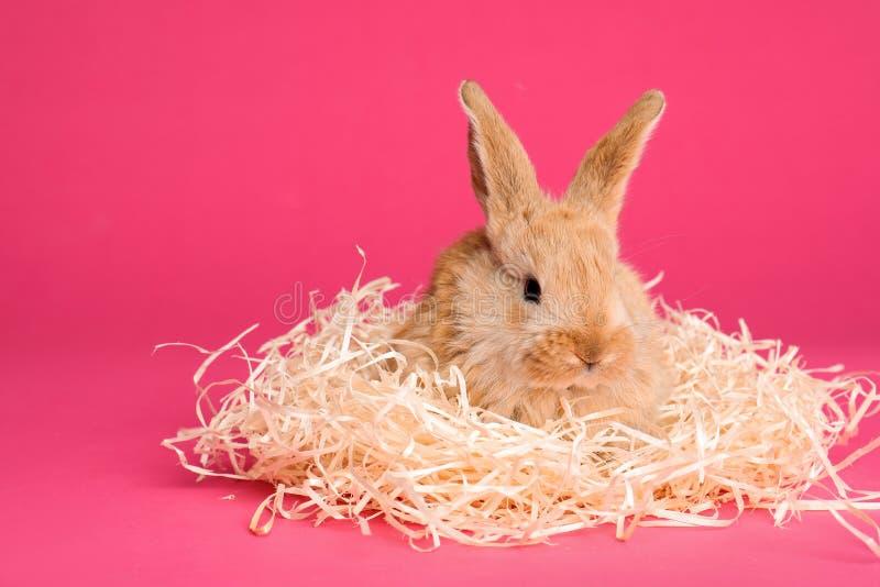 与装饰秸杆的可爱的毛茸的复活节兔子在颜色背景 免版税库存照片