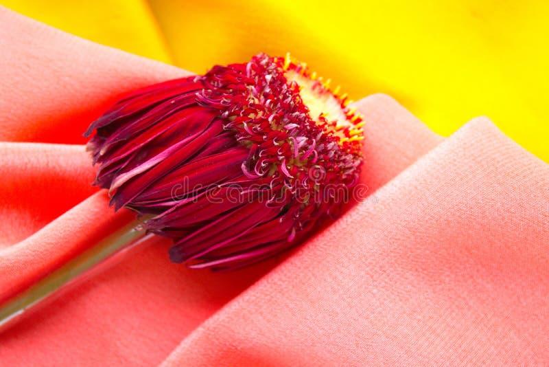 与说谎在桃红色和黄色织品的紫色叶子的花 免版税库存照片