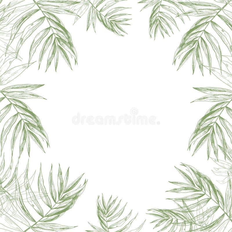 与边界的热带夏天密林框架背景由绿色热带棕榈叶做成和文本的一个地方 手 向量例证