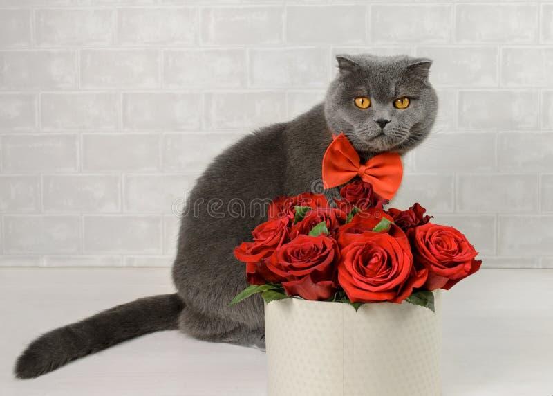 与花的一只灰色猫 库存图片