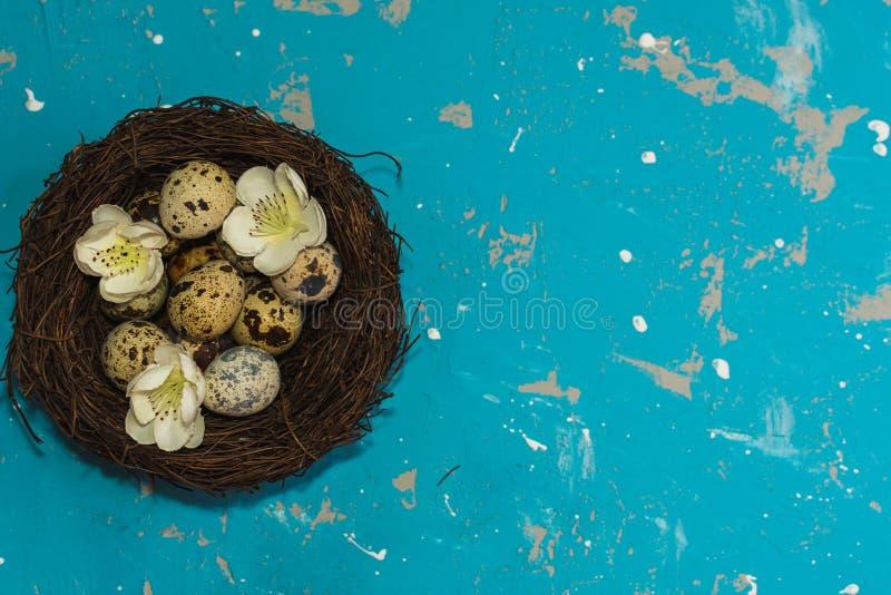 与花的鹌鹑蛋在蓝色背景的巢 看板卡愉快的复活节 库存图片
